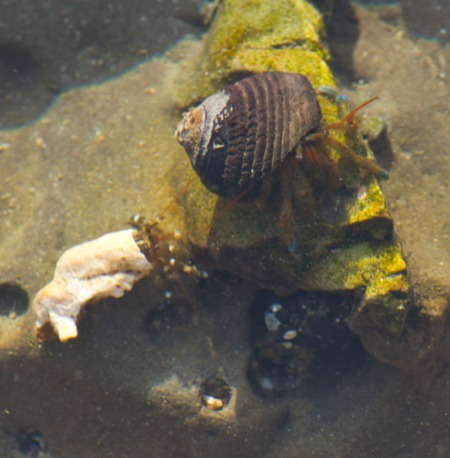Close up of 2 hermit crabs