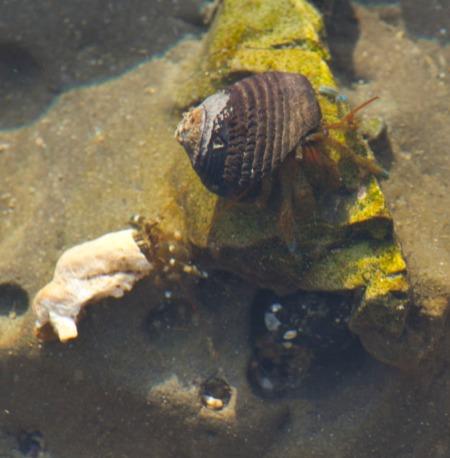 Close up of 2 hermit crabs