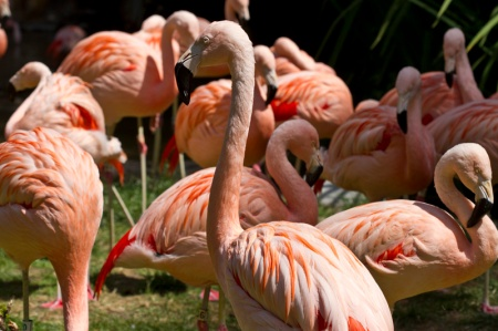 group of flamingos in zoo