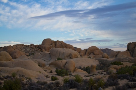 Sunrise in Joshua Tree N.P.