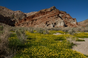 Red Rock Canyon with wildflowers lanscapce fine art photography