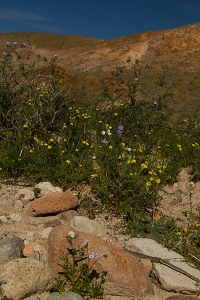 Red Rock Canyon landscape wildflower fine art photography