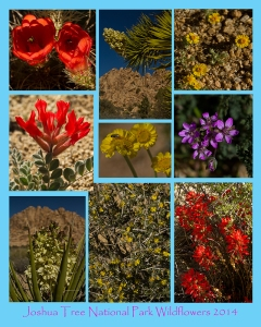 wildflower fine art photography poster