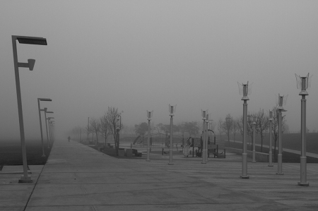 Park in the fog. L.A. Port Fog Series 2015