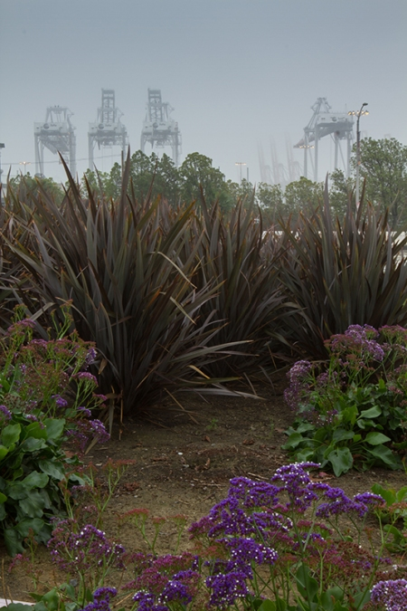 Cranes in the background, flowers for contrast. L.A. Port Fog Series 2015