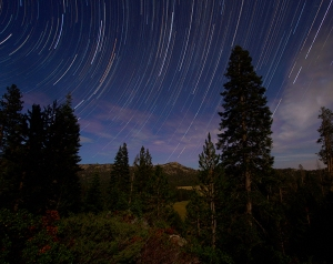 Star trails, Big Meadow, Sierra Nevada Mts. 2014