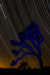 Joshua Tree N.P. Light painting with 4 hour star trails. (120 frames stacked)