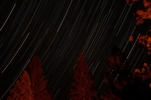 Trees lit by campfire. Star Trails. Yosemite 2013