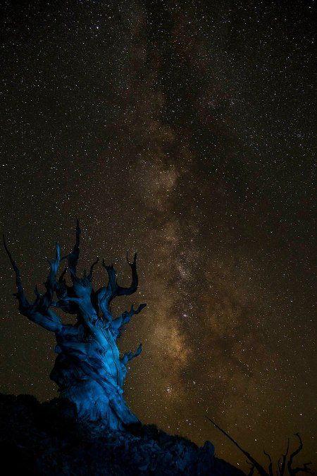 acient tree like by light with Milky Way in background.