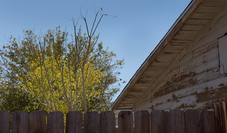 the old wooden building, paint peeling, tree with no leaves, trees with fall colors