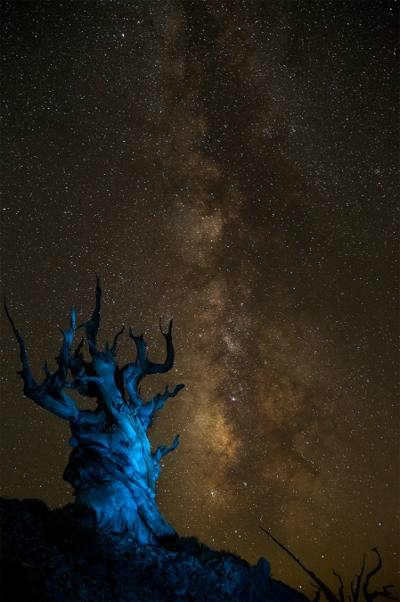 Bristlecone Pine, light painting with Milky Way. Copyright Vanderhoof Photography 2016