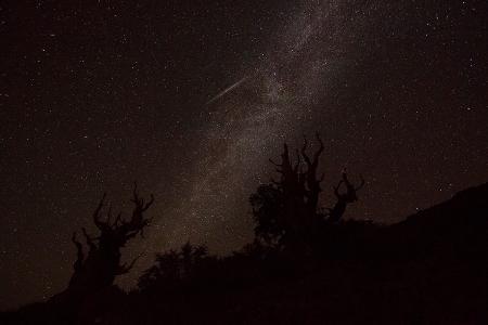 20150809 Bristlecone shootingStar-1258