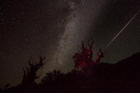 20150809 Bristlecone shootingStar-1488