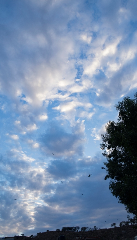 20160412 San Juan clouds_birds-9253