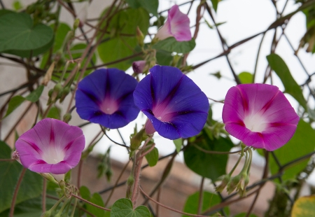 20160805 San Juan flowers-5938FB