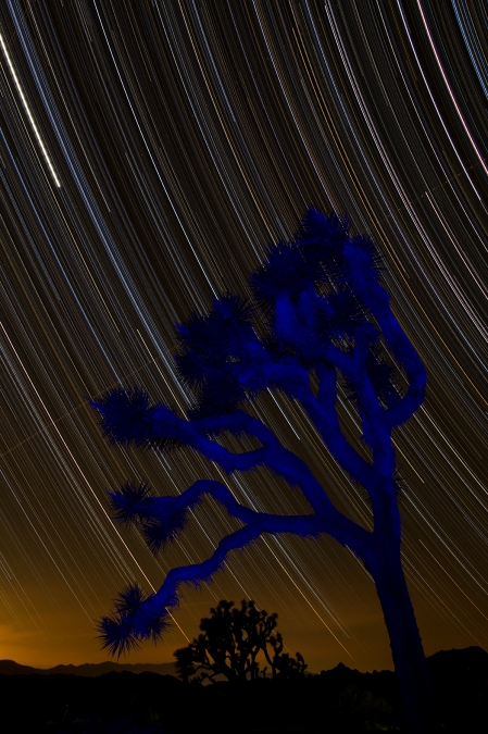 joshua-tree-1-25-14-star-trails-120-framesfb